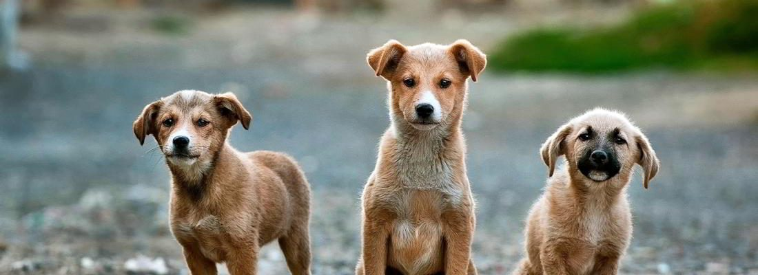 group-puppies